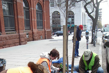 Million Tree Project, Washington DC. Forrás: American Forest